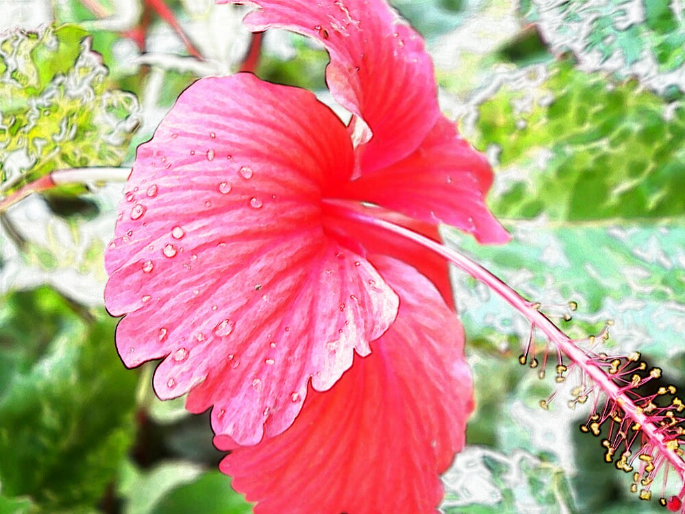Tropical hibiscus by islefox