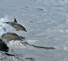 Common Dolphin, Treshnish, Scotland by Tim Collier