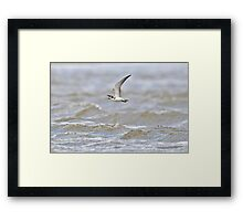Black Tern Over Rough Water Framed Print