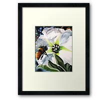 """Bee-ing There"" - large Mexican bee on a white blossom Framed Print"