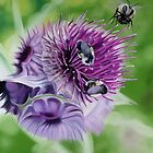 """Wild Thistles"" - wild flowers with bees by James  Knowles"