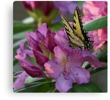 Butterfly on Laurel Bush Canvas Print