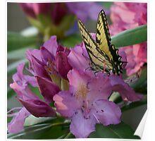 Butterfly on Laurel Bush Poster
