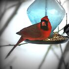 Cardinal on Blue Feeder by Margie Avellino
