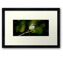 Young Blue Tit Framed Print