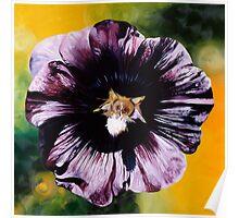 """Purple Hollyhock""- large almost black hollyhock  Poster"