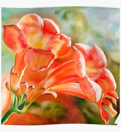"""Spanish Trumpets"" - vibrant orange trumpet shaped flowers Poster"