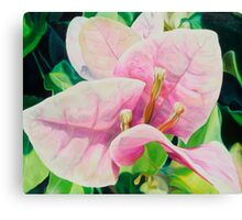 """Blushing Bugambilia"" - pink bougainvillea blossoms Canvas Print"