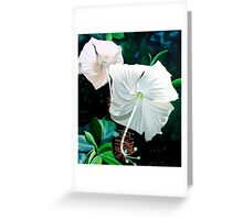 """""""Hibiscus Blancas"""" - white hibiscus blossoms Greeting Card"""