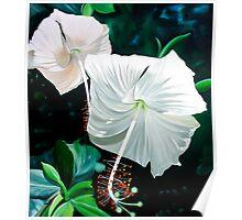 """Hibiscus Blancas"" - white hibiscus blossoms Poster"