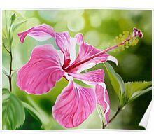 """""""Hibiscus"""" translucent pink hibiscus flower Poster"""