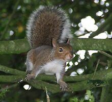 Squirrel  by OPUS1