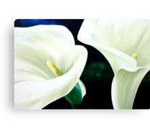 """Mercy and Majesty"" - huge painting of calla lilies Canvas Print"