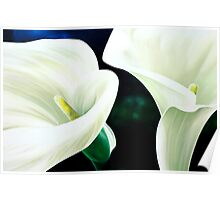 """Mercy and Majesty"" - huge painting of calla lilies Poster"