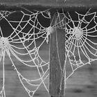 Frosty morning cobweb by OPUS1