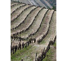 Vineyard lines Photographic Print