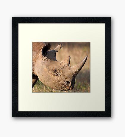 Black Rhino Profile Framed Print