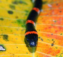 Halloween Snake by Robbie Labanowski