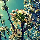 Tree Buds by Susan S. Kline