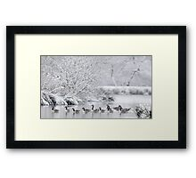Frozen Lake with Canada Geese, Wales Framed Print