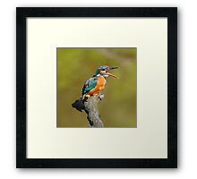 Yawning Kingfisher Framed Print