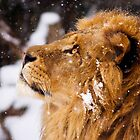 What is that white stuff coming from the sky?!! by BigCatPhotos