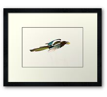 Magpie Colours Framed Print