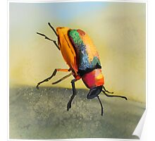 Acrobat Beetle Poster