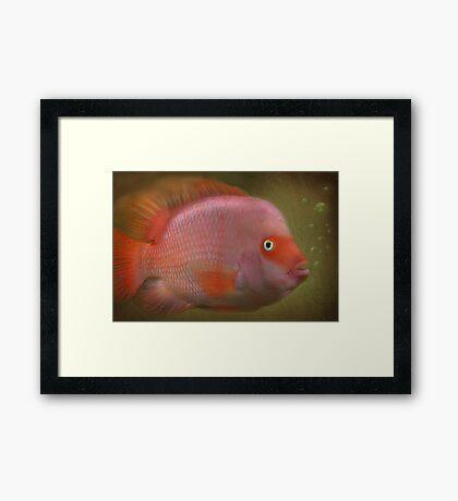 Meee......   Jaws  !!!! Framed Print
