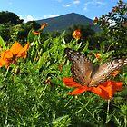 Butterfly Volcano by Robbie Labanowski