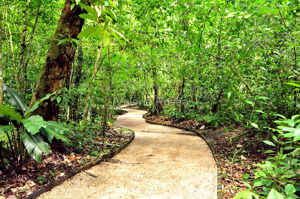 Peaceful Palenque Path by Valerie Rosen