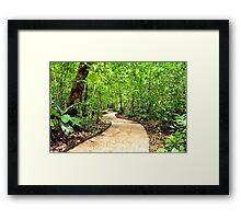 Peaceful Palenque Path Framed Print