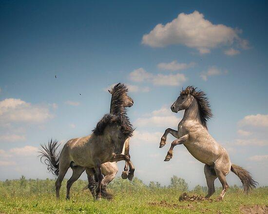 Prancing Horses by Henri Ton
