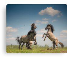 Prancing Horses Canvas Print