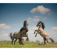 Prancing Horses Photographic Print