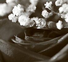 Romance #2 by Lynn  Gibbons