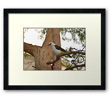 Time To Nest Framed Print
