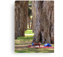 ~ Afternoon Tree Time ~  Canvas Print