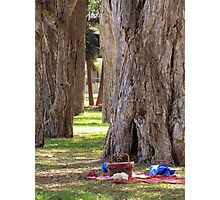 ~ Afternoon Tree Time ~  Photographic Print