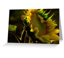 Sunshine for Anne Gitto Greeting Card
