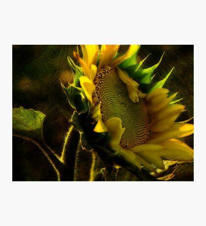 Sunshine for Anne Gitto Photographic Print