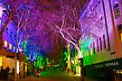 Trees at night by Elaine123