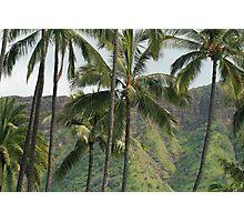 Hawaii: Honolulu Palms Photographic Print