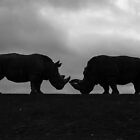 Rhino face off by MartynJames