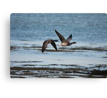 brent geese Canvas Print