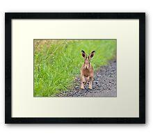 Brown Hare, Lancashire Mosses Framed Print