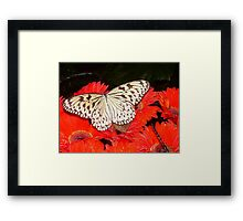 Classic colour combo Framed Print