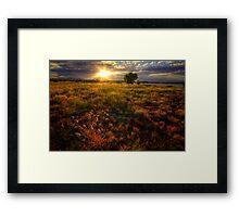 Sun Field Framed Print