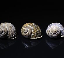 Snail Shells by Nigel Bangert