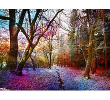 Colorful Enchanted Winter Forest Landscape Photographic Print